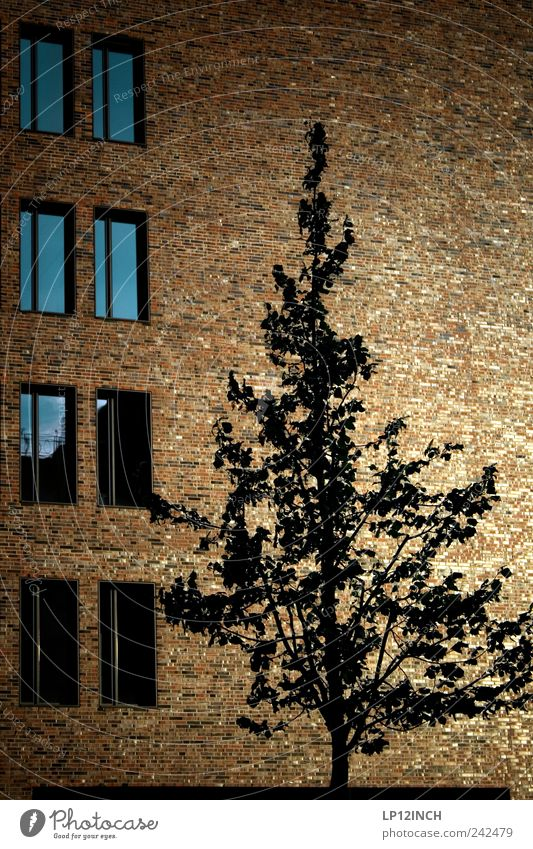 Hafencity tree Environment Tree Germany Europe Port City House (Residential Structure) Building Architecture Wall (barrier) Wall (building) Facade Window Wood