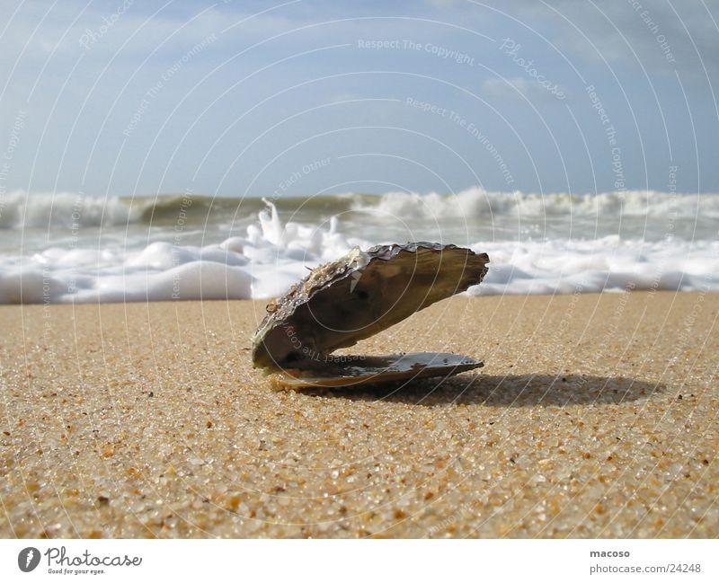Mussel before sinking Ocean Beach Waves Surf Water