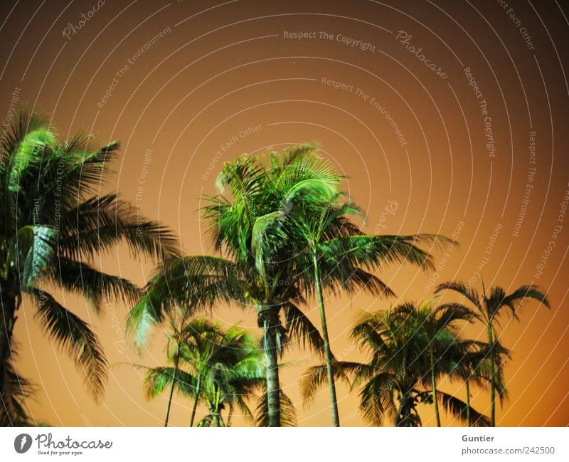 forget the blue,... Environment Nature Plant Climate change Brown Green Black White Change Sky Night sky Tree Palm tree Palm frond Exotic Palm beach