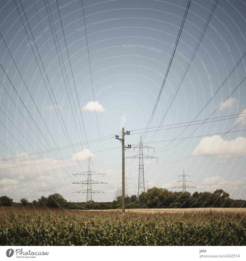 stream Environment Nature Landscape Plant Sky Clouds Summer Field Electricity Electricity pylon Infinity Colour photo Exterior shot Deserted Neutral Background
