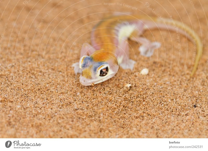 Nature Blue Beautiful White Animal Far-off places Environment Yellow Exceptional Sand Leisure and hobbies Fog Earth Wild animal Observe Thin