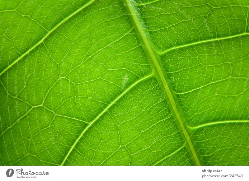 Chlorophyll dispenser Elegant Decoration Environment Nature Animal Elements Climate Climate change Weather Plant Leaf Foliage plant Pot plant Relaxation