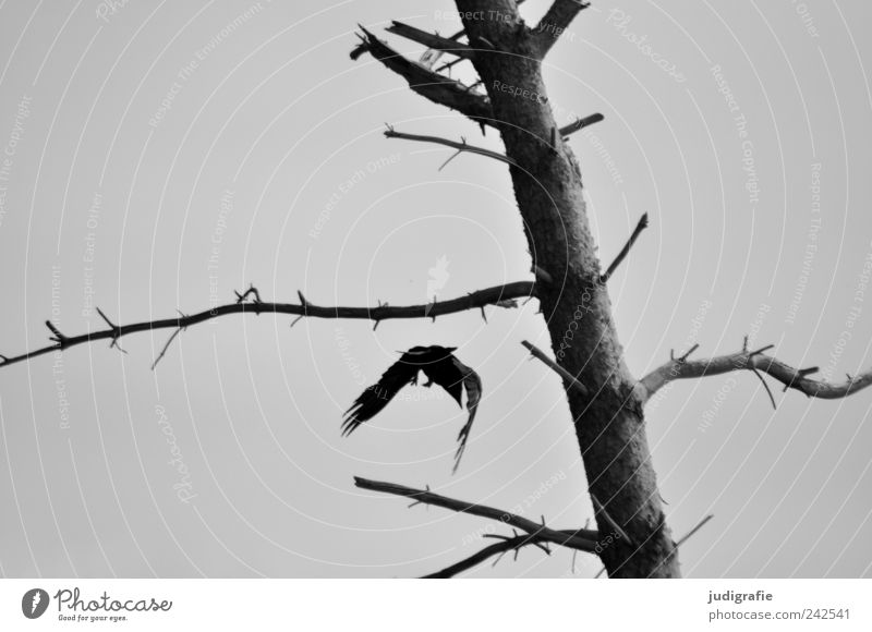 Nature Tree Plant Animal Dark Death Landscape Moody Bird Environment Flying Change Transience Wild Natural Creepy