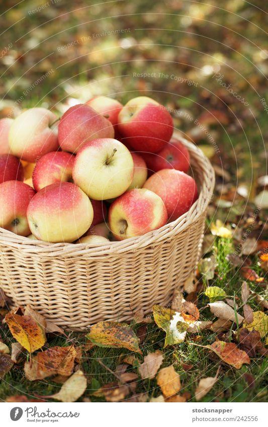 Apples Seasons Autumn Deserted Red Gardening Lawn ripe Fruit Harvest Basket Wicker basket