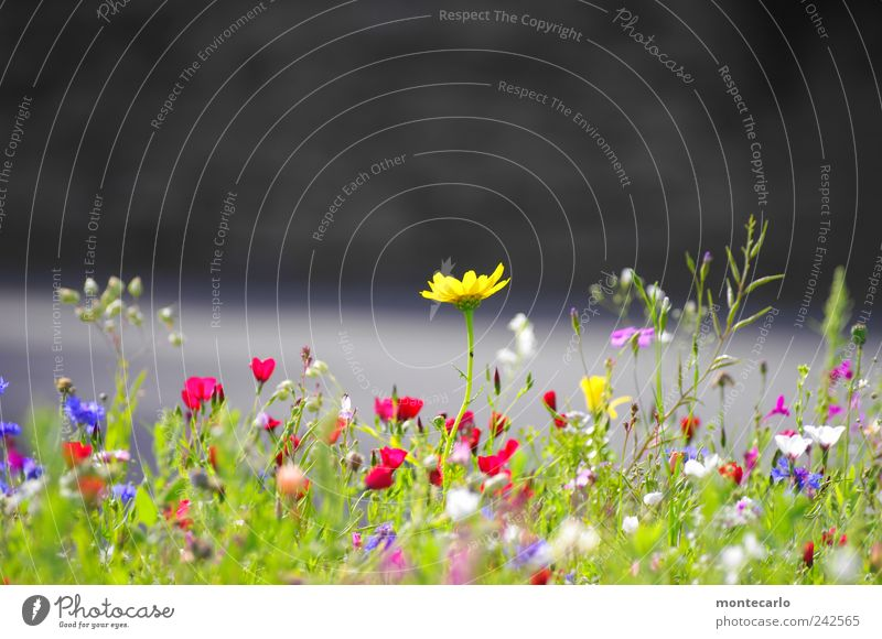 A little summer Nature Plant Sunlight Summer Beautiful weather Flower Leaf Blossom Foliage plant Meadow Colour Idyll Colour photo Multicoloured Exterior shot