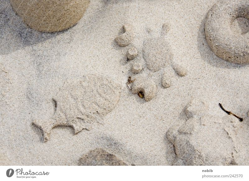 Summer Beach Vacation & Travel Calm Playing Gray Sand Art Fish Esthetic Group of animals Leisure and hobbies Uniqueness Sculpture Build Ornament