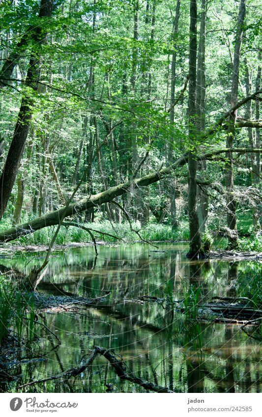 Nature Water Tree Loneliness Forest Life Dark Hiking Tourism Idyll Creepy Agriculture Virgin forest Exotic Brook Timidity