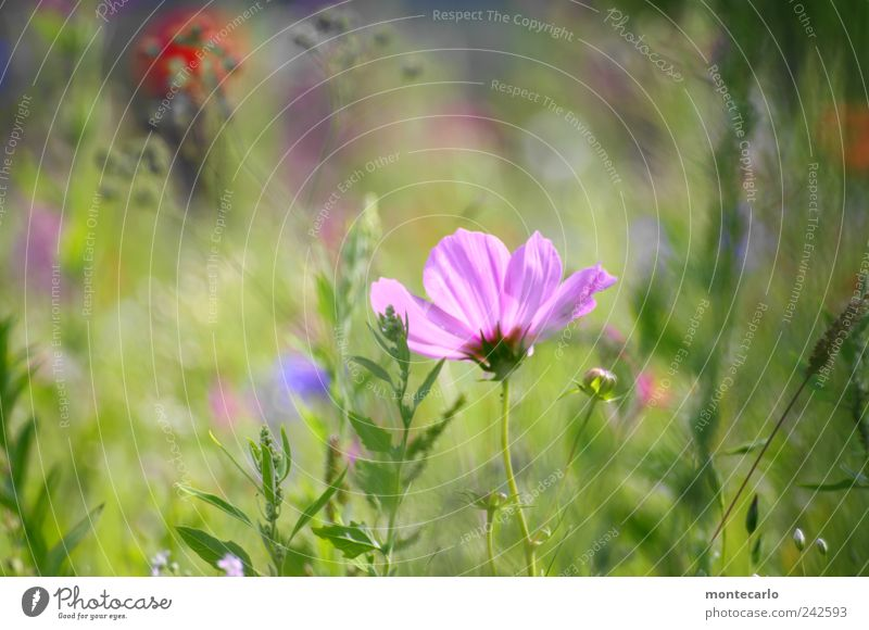 Nature Plant Summer Flower Leaf Meadow Grass Blossom Park Bushes Beautiful weather Foliage plant
