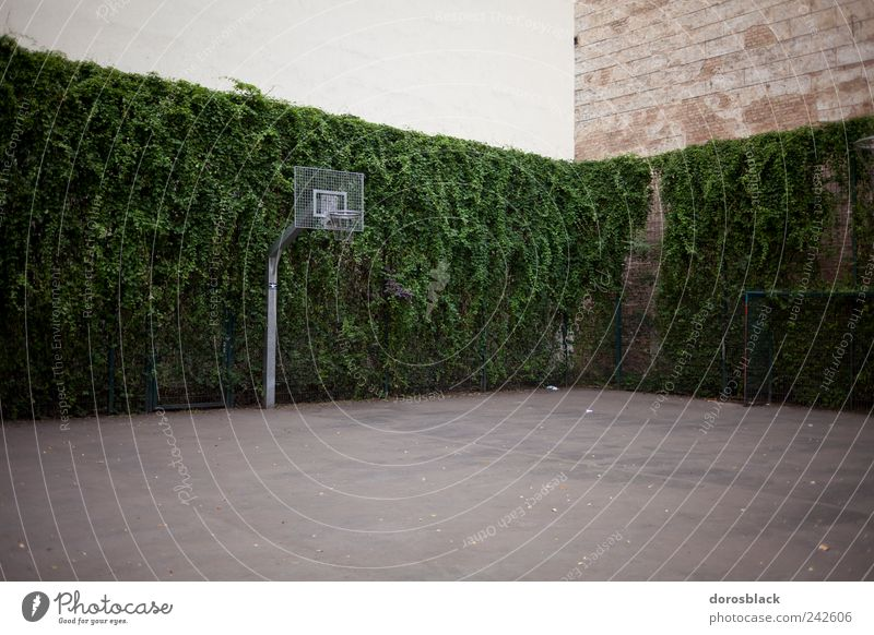 House (Residential Structure) Sports Playing Wall (barrier) Building Germany Leisure and hobbies Europe Ball Basketball basket Ball sports Environment