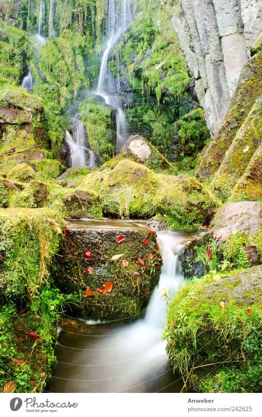 Waterfall in autumn Environment Nature Landscape Plant Elements Drops of water Autumn Garden Park Brook Kassel Bad Wilhelmshöhe Hesse Wilhelmshöhe mountain park