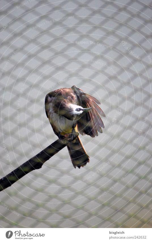 Animal Eyes Brown Bird Wing Branch Beak Grating Tails Mesh grid