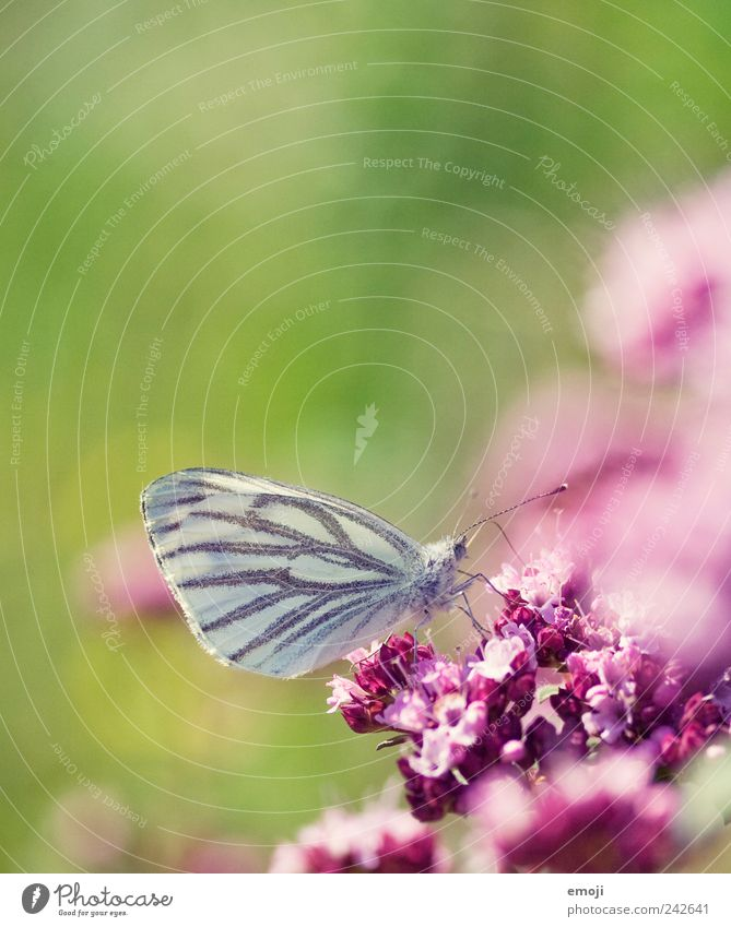 Nature Flower Green Plant Animal Blossom Spring Pink Butterfly Ease