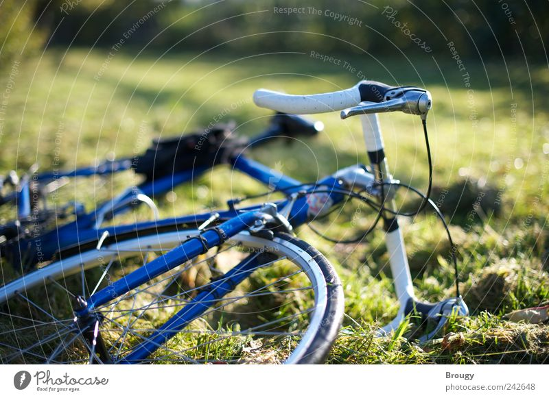 Blue bicycle on green autumn meadow Leisure and hobbies Trip Freedom Summer Summer vacation Garden Bicycle Environment Nature Plant Beautiful weather Grass