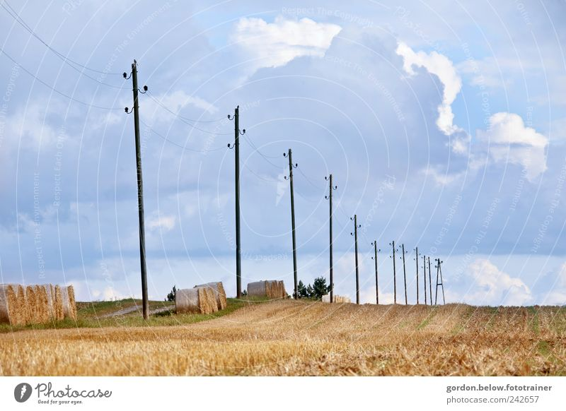 Power pylons I Grain Summer Technology Energy industry Energy crisis Environment Landscape Sky Clouds Storm clouds Climate change Beautiful weather Field