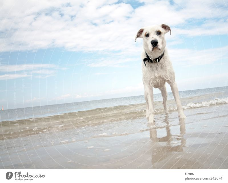 Dog Sky Water Ocean Calm Clouds Animal Beach Sand Horizon Wait Wet Beautiful weather Observe Curiosity Pelt