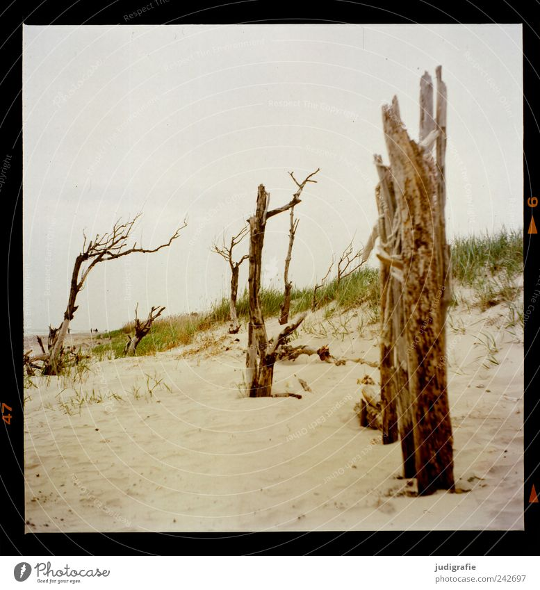 western beach Environment Nature Landscape Plant Tree Grass Coast Beach Baltic Sea Ocean Sand Wood To dry up Exceptional Natural Wild Moody Transience Change