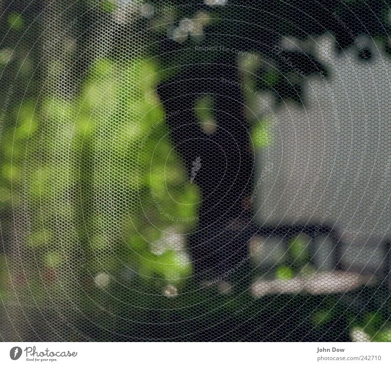 transparency Living or residing Beautiful weather Tree Grass Bushes Garden Park Protection Network Reticular Loop Pixel Fly Insect repellent Pattern Woven