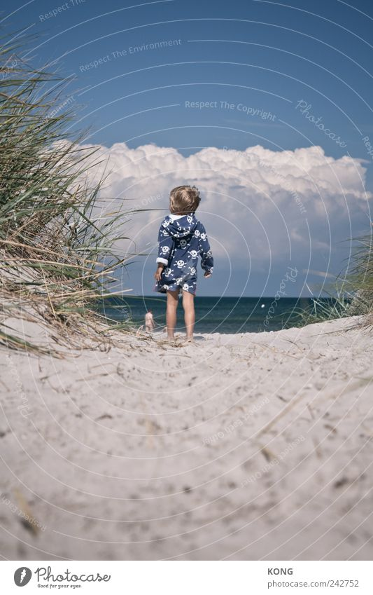 sea air arouses curiosity Vacation & Travel Summer Summer vacation Beach Child Boy (child) 1 Human being 3 - 8 years Infancy Clouds Coast Baltic Sea Observe