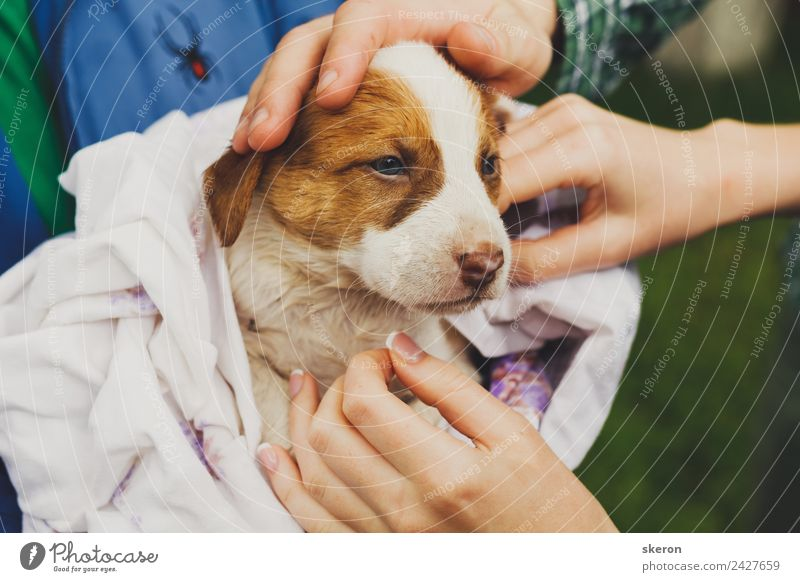 home a wet puppy after a bath wrapped in a towel Nature Dog Beautiful Green Landscape Animal Baby animal Environment Emotions Exceptional Brown Friendship