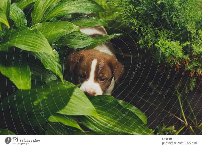 home puppy walking in the Park Dog Green Animal Moody Contentment Esthetic Adventure Optimism