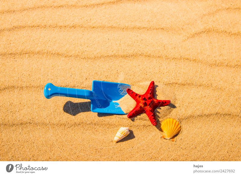 Shovel and starfish on the beach Joy Relaxation Vacation & Travel Summer Beach Child Sand Baltic Sea Yellow Tourism Children's game Toys Starfish Red snails