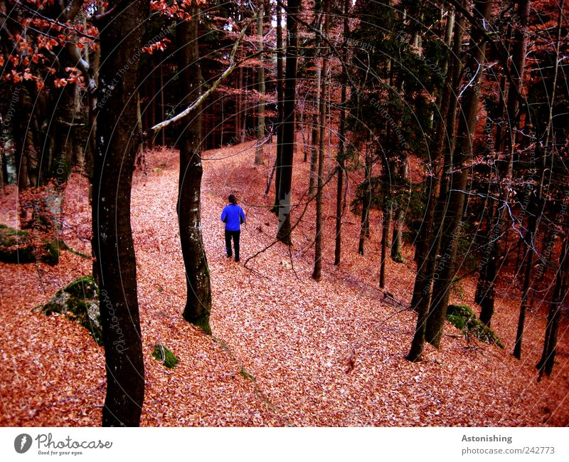 Human being Man Nature Blue Tree Red Plant Leaf Black Forest Adults Environment Landscape Autumn Lanes & trails Stone