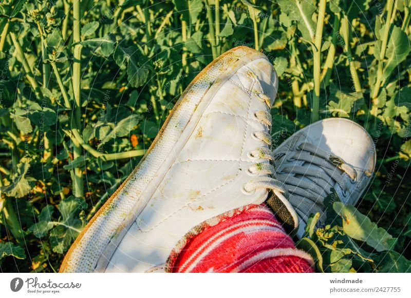 Crossed feet with dirty sports shoes in the green Legs 1 Human being Environment Nature Summer Plant Foliage plant Agricultural crop Field Stockings Footwear