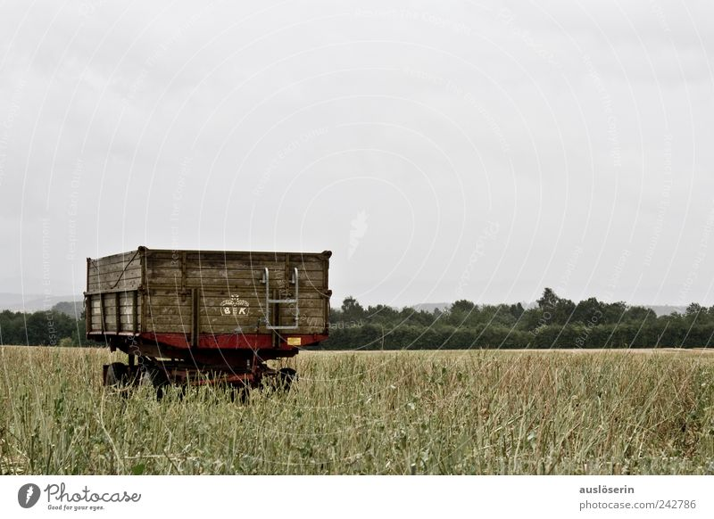 lonely wagon Environment Nature Landscape Plant Earth Sky Clouds Weather Bad weather Rain Agricultural crop Canola Canola field Oilseed rape cultivation Field