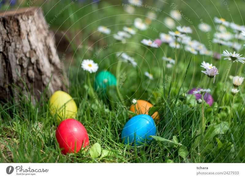 Easter hunt Joy Happy Playing Hunting Garden Decoration Feasts & Celebrations Hand Nature Tree Flower Grass Park Meadow Fresh Blue Green White