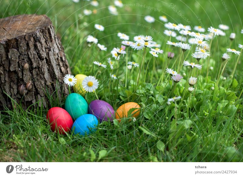 Easter eggs in a garden Joy Happy Playing Hunting Garden Decoration Feasts & Celebrations Hand Nature Tree Flower Grass Park Meadow Fresh Blue Green White