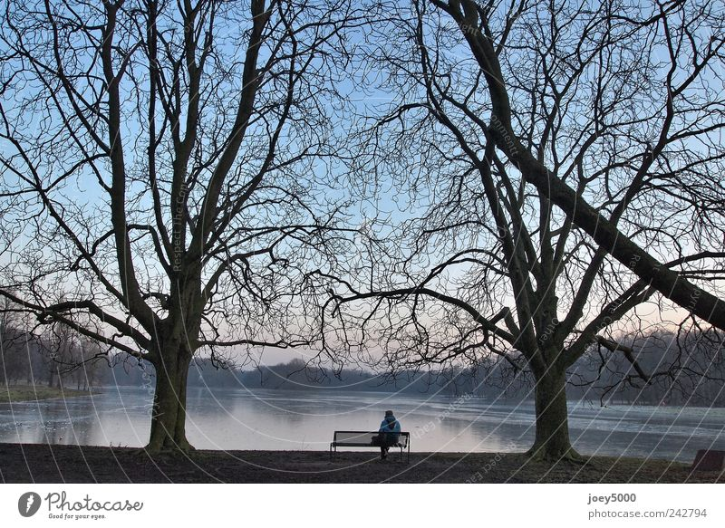 Human being Blue Tree Loneliness Calm Adults Cold Emotions Lake Park Power Wait Sit Natural Tall Large