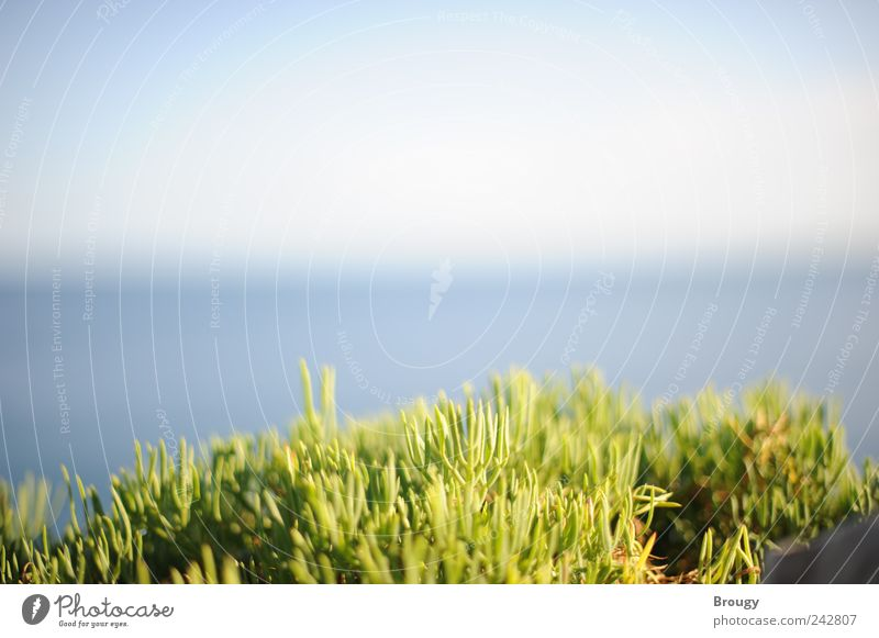 Nature Water Beautiful Vacation & Travel Ocean Summer Beach Calm Far-off places Freedom Grass Small Coast Waves Trip