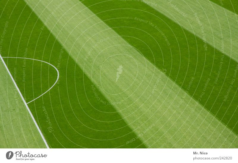 Green Meadow Sports Grass Line Fresh Stripe Striped Sporting event Geometry Juicy Stadium Football pitch World Cup Arena Ball sports