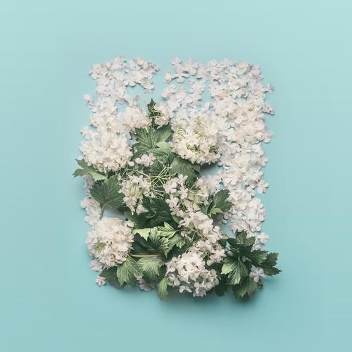 White Flowers Composing on light blue Style Design Summer Decoration Feasts & Celebrations Mother's Day Easter Wedding Birthday Nature Plant Spring Leaf Blossom