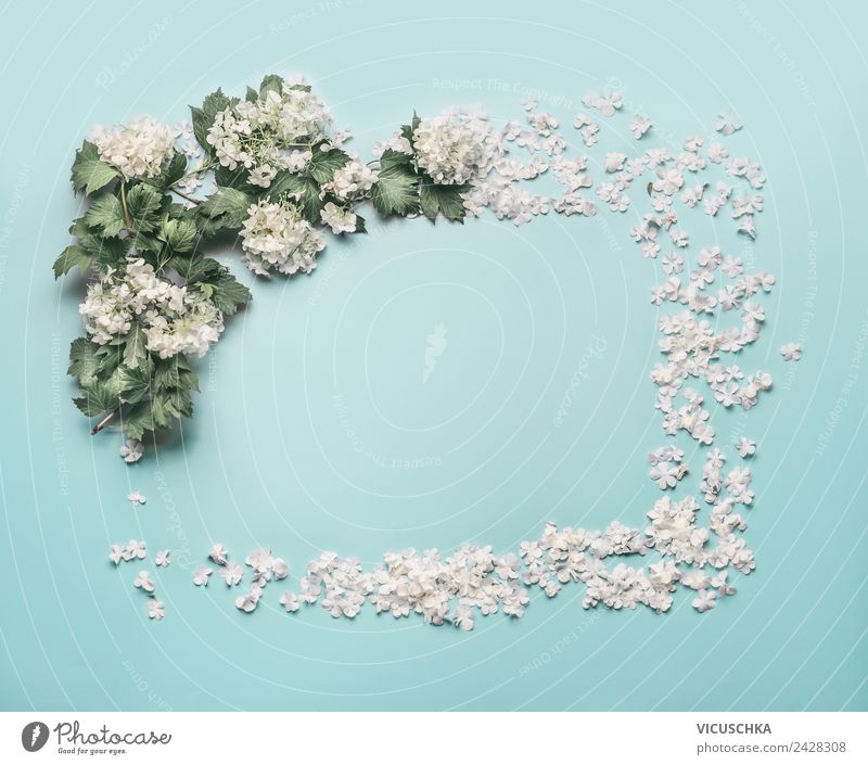 White flowers and petals frame on light blue Style Design Summer Decoration Feasts & Celebrations Nature Plant Flower Leaf Blossom Bouquet Ornament Love