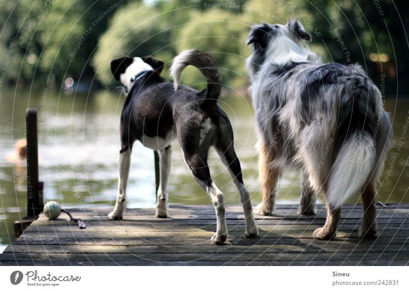 Nature Water Summer Animal Dog Lake Friendship Together Wait Stand Leisure and hobbies Observe Swimming & Bathing Curiosity Footbridge Watchfulness