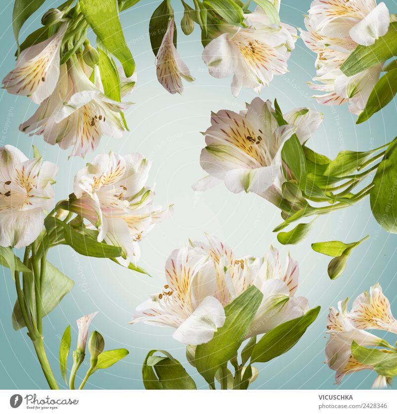 Floral background pattern with white flowers Style Design Spa Summer Garden Nature Plant Spring Flower Leaf Blossom Decoration Bouquet Ornament Fragrance