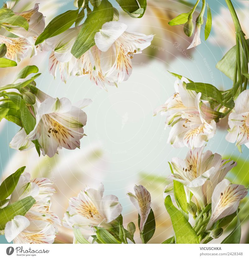 Flower Background Frame Style Design Summer Garden Nature Plant Spring Leaf Blossom Bouquet Yellow Background picture Arranged White Blue Green Colour photo