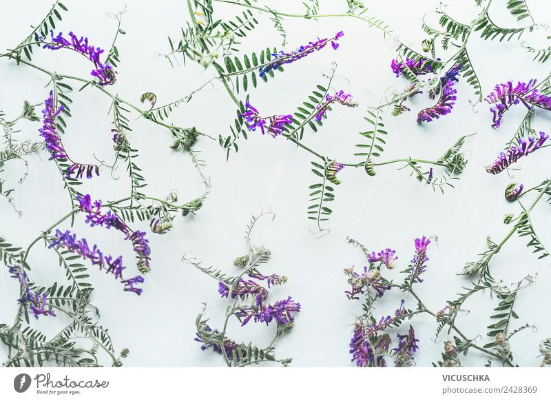Wild flower pattern on white background Style Design Summer Garden Decoration Nature Plant Flower Wild plant Ornament Background picture Meadow flower Pattern