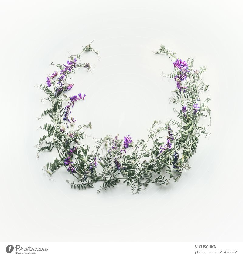 Wreath of wild purple flowers Style Design Summer Nature Plant Flower Leaf Blossom Decoration Bouquet Background picture Frame Round Bright background Sweet pea