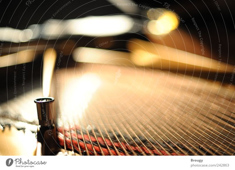 Steinway & Sons Art Concert Grand piano Piano Musical instrument string Character Mechanics Blur Sadness Esthetic Exceptional Gold Silver Emotions Moody Honor