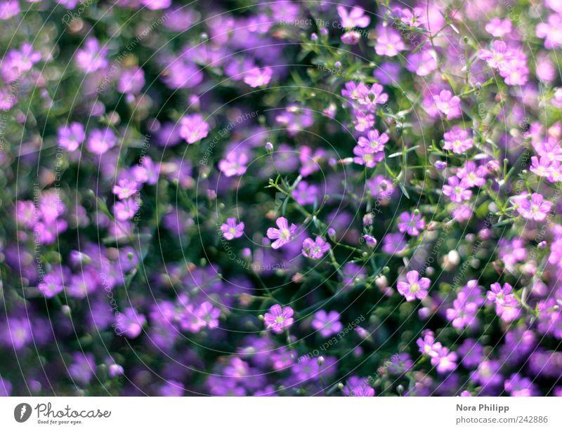 Nature Beautiful Flower Plant Summer Leaf Life Blossom Garden Park Small Environment Esthetic Bushes Violet Delicate