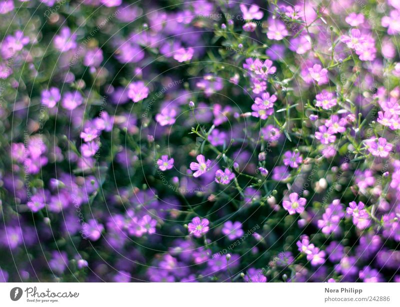 Nature Beautiful Flower Plant Summer Leaf Life Blossom Garden Park Small Environment Esthetic Bushes Violet Delicate