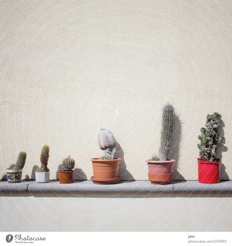 Plant Wall (building) Wall (barrier) Facade Esthetic Good Collection Cactus Pot plant