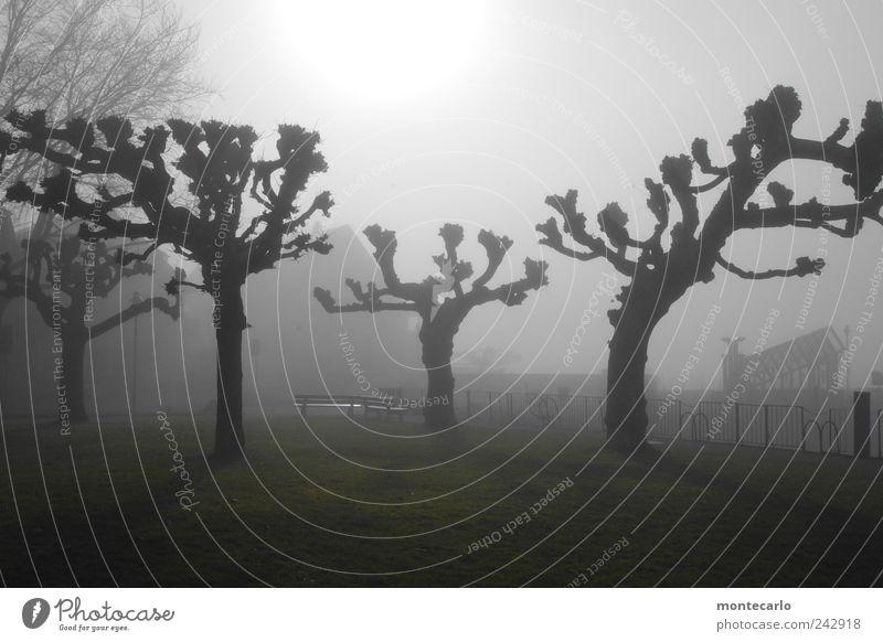 Nature Sky Tree Sun Plant Winter Dark Lake Moody Fog Lakeside American Sycamore