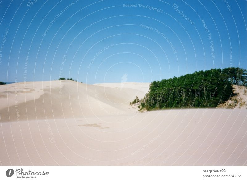 desert Beach Forest Sand Desert sandy landscape Wind Beach dune