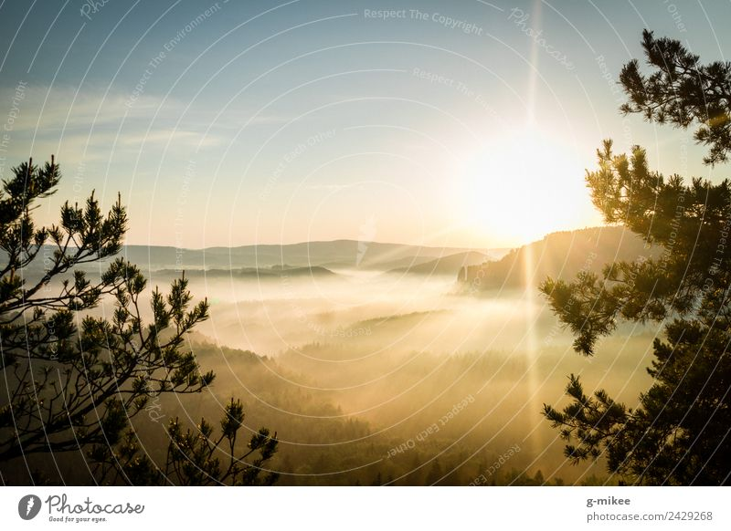 Sunrise in the mountains Nature Landscape Fog Forest Mountain Elbsandstone mountains Relaxation Hiking Bright Warmth Blue Yellow Gold Warm-heartedness Calm