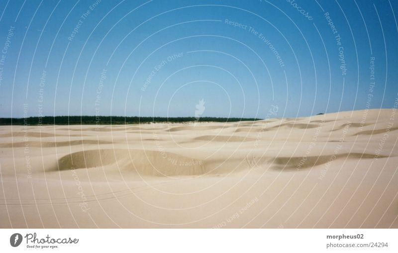 Beach Forest Sand Desert Beach dune