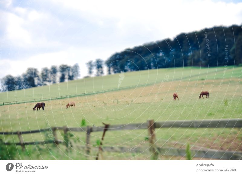 on the field. Harmonious Agriculture Forestry Landscape Sky Summer Meadow Deserted Animal Pet Horse 4 Animal family Field Control barrier Wood Grass Green Fence