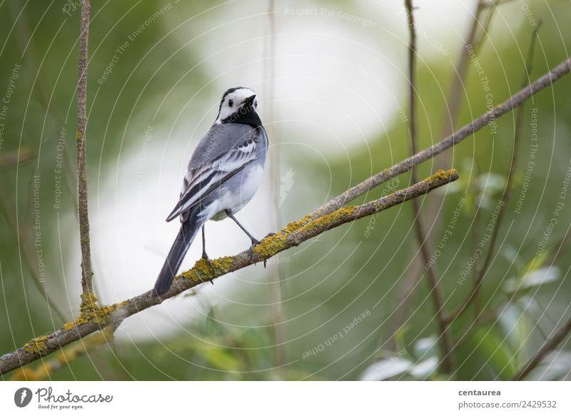 Nature Green White Tree Animal Black Spring Garden Bird Gray Contentment Park Elegant Wild animal Stand Bushes